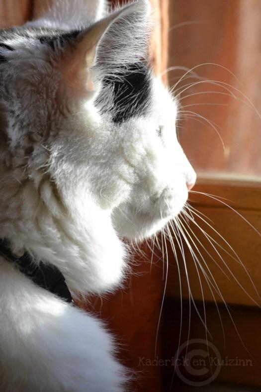 Projet 52-photo de mon chat qui regarde par la fenêtre theme 46