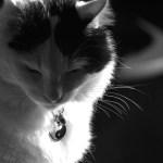 projet 52, photo de mon chat en noir et blanc