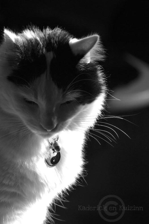 Projet 52-photo de mon chat en noir et blanc theme 46