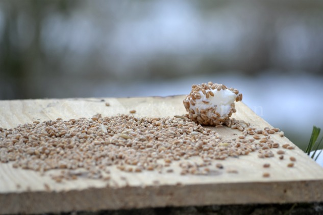 Photo de la boule de graisse et de graines sur une planche pour le thème Voler du projet 52 pour vivre la photo