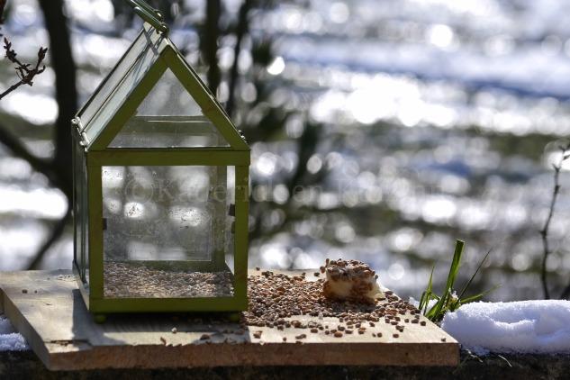 Photo de la cabane avec les graines pour le thème Voler du projet 52 pour vivre la photo