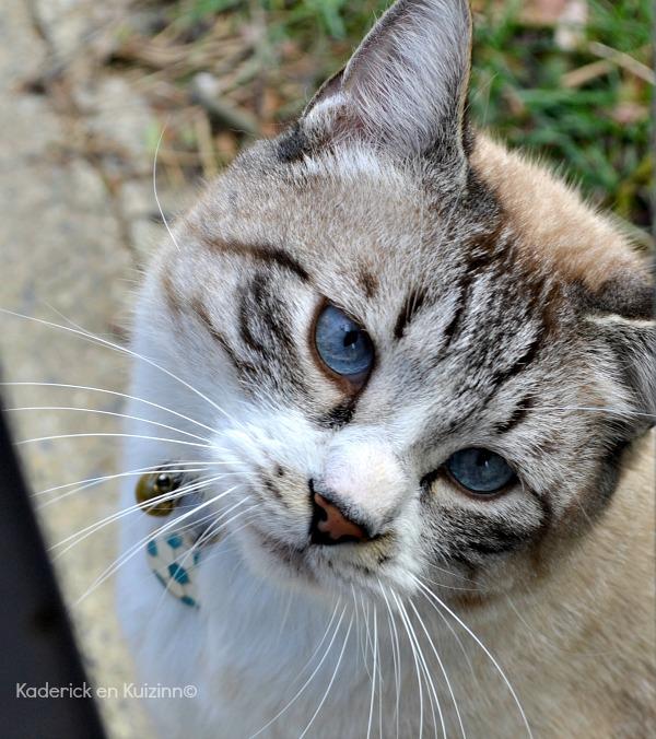 amour serré chatte fenêtre Media Player porno