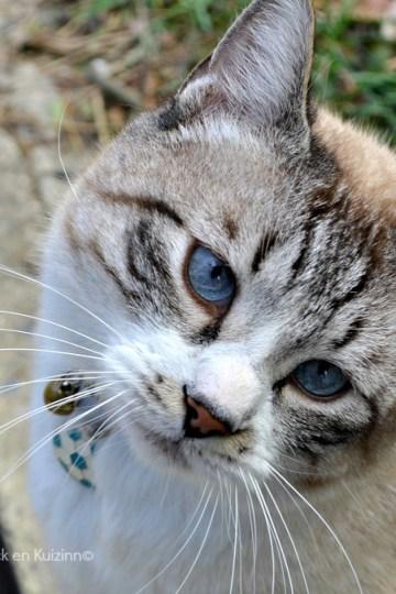 ♥ Andy au revoir notre Didi chat d'Amour ♥ Kaderick