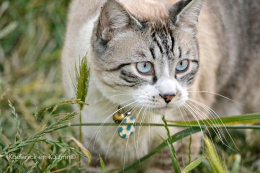 Andy, au revoir notre Didi chat d'Amour - Kaderick en Kuizinn©
