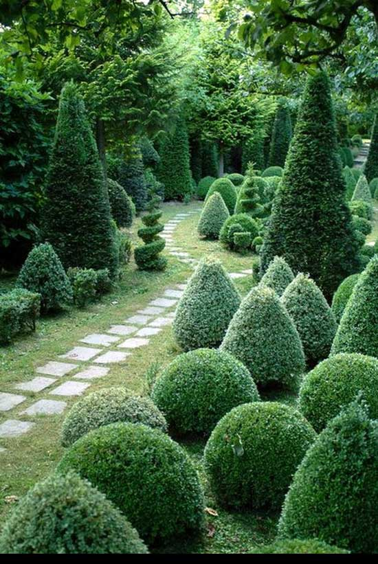 Best way to cut a privet Hedge, Traditional-Cones-and-Mounts,