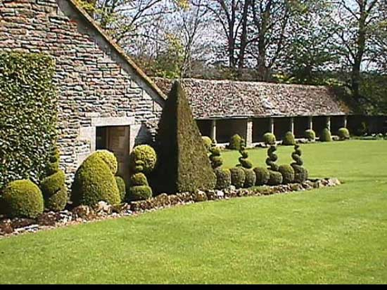 Best way to cut a privet Hedge, spiral-topiary-shape-hedge,