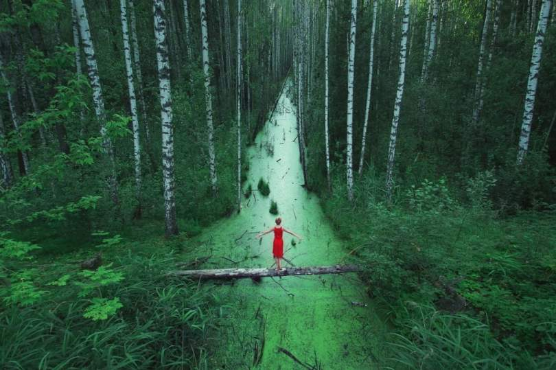 forests-without-end-russia