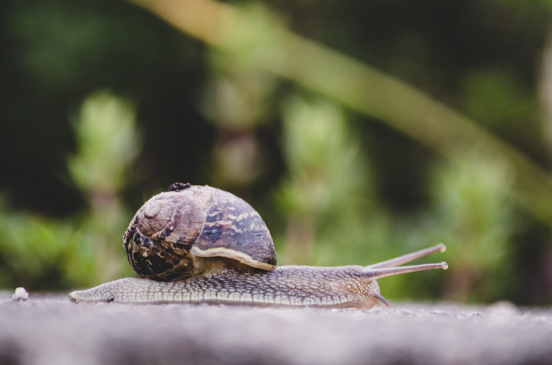 selective focus photography of snail