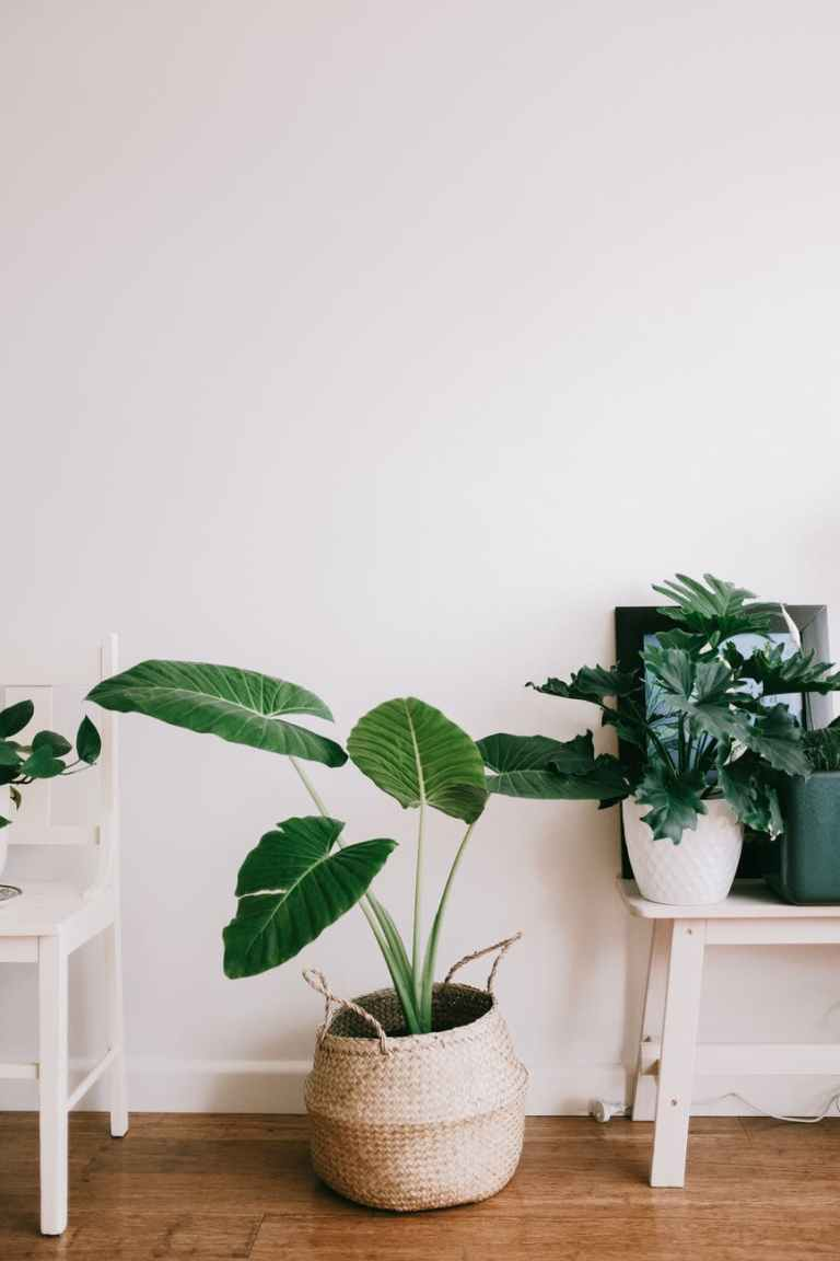 green plant on white wooden table