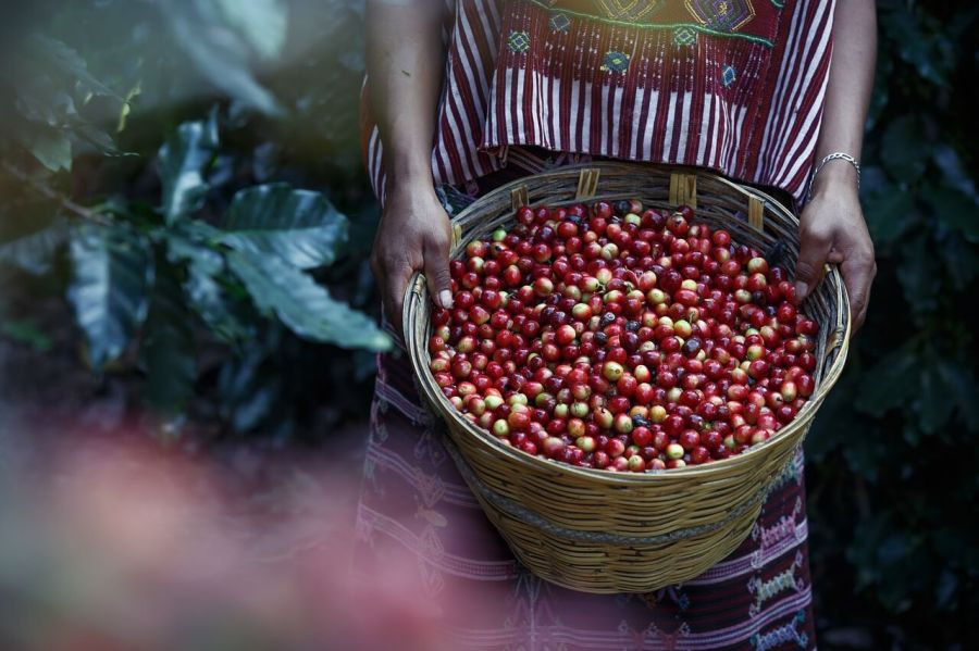 tarrazu kaffee costa rica