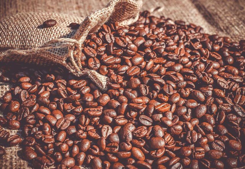 kaffee aus mexiko test