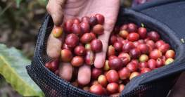 katzenkaffee header