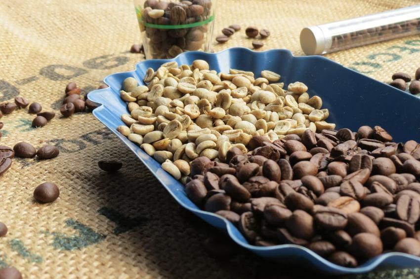 honduras grüner kaffee