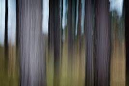 """Abstract Pines"" by Chris Shepherd at Shepherdpics.com"