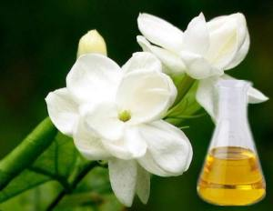 Jasmine & its oil. Source: krishnaaromatics.com