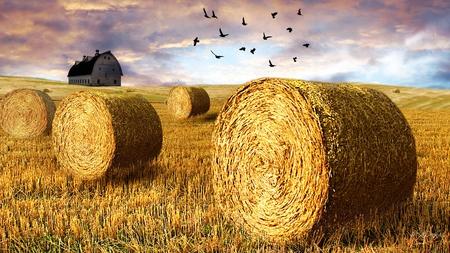 Fall Harvest Computer Wallpaper Guerlain Jicky Clair De Lune Kafkaesque