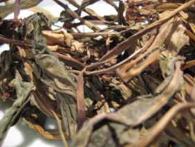 Dried Liatris or Liatrix leaves. Source:  luminescents.co.uk