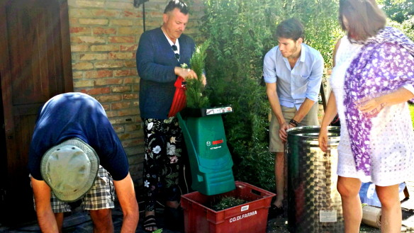 Salman, Manuel, Matthew & Jackie helping to shred fresh cypress into slivers small enough for distillation in the 30 kilo silver vat. Photo: my own.