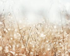 """Morning Dew,"" Carolyn Cochrane at her Etsy store. (Direct website link embedded within.)"