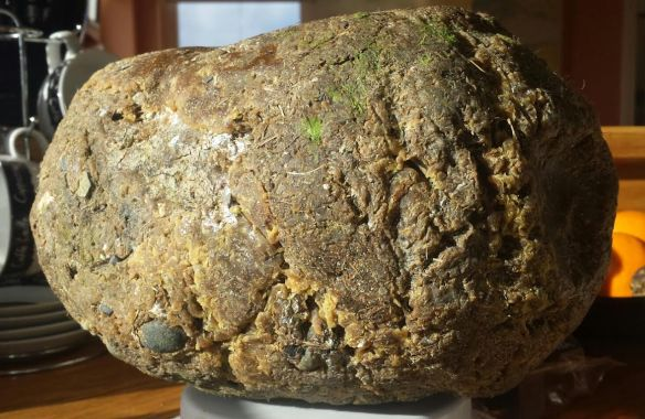 "Photo: Patrick Lillis. 3kg of ""stinky"" ambergris ""sludgy"" which means it's soft and smushy in texture. Please note the frond-like, vegetal greenness at the very top."