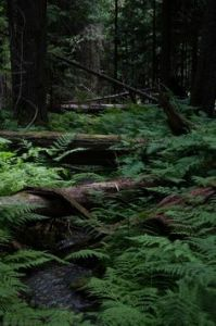 Fern forest. Photo: Quinn Johnson Photography via 500px/ (Direct website link embedded within.)