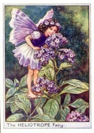 """Heliotrope Flower Fairy,"" vintage print, c.1950, by Cicely Mary Barker. Source: Pinterest."