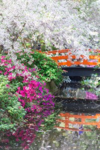 Descanso Gardens, California. Photo by Suzette Barnett at her website, Try Something Fun. (Direct link embedded within.)
