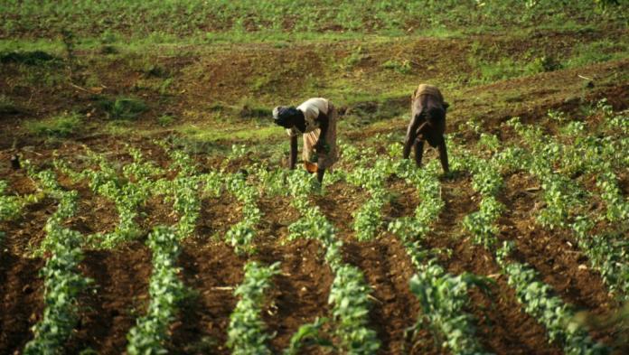 Sayouba Traoré nous parle d'agro-climatologie en Pointe-Noire et en République du Congo.