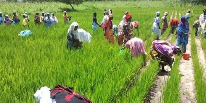senegal_agriculture_femmes
