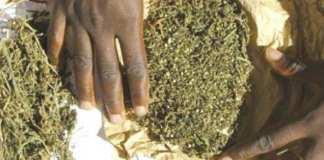 Souhébou Sow et Mourtala Sow écopent de 15 ans pour trafic international de drogue