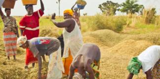 Sécurité alimentaire en phase minimale à Kaffrine (Chef de service)