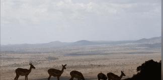 La nature souffre comme jamais auparavant dans l'histoire de l'humanité : voilà l'enseignement d'un rapport alarmant sur la biodiversité, d'une ampleur inédite jusque-là, publié lundi par un groupe d'experts internationaux. /Photo d'archives/REUTERS/Baz Ratner