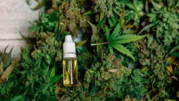 expérimentation du cannabis thérapeutique en France devrait démarrer en septembre