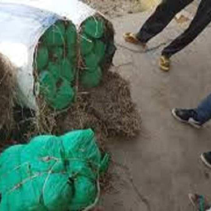 Drogue + 10 Kg de yamba saisis à Kaffrine