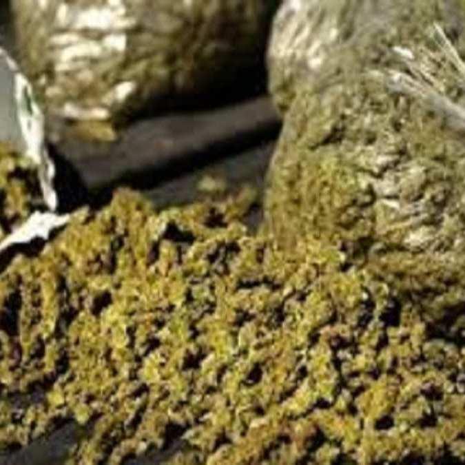 Une saisie de 248 kilogrammes de chanvre indien à Rufisque (Police)
