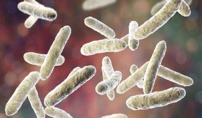 Faire une cure de probiotiques pour protéger l'immunité 8-12