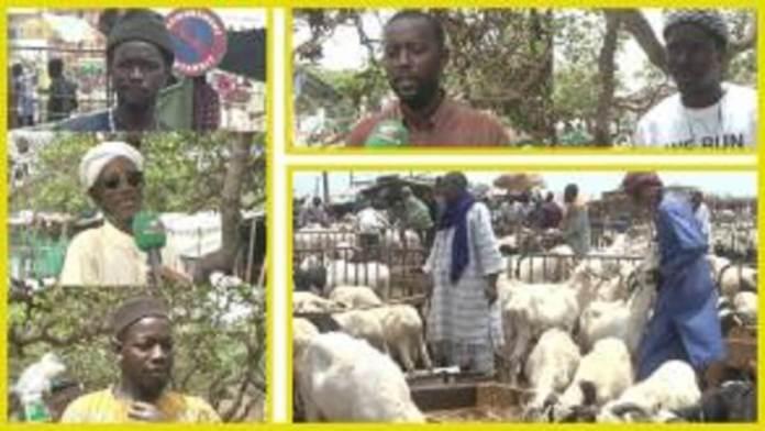 Thiès attend 210.000 moutons de tabaski (Service Élevage)+