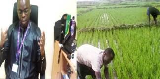 Vallée La filière riz financée à hauteur de 4, 6 millions par la LBA