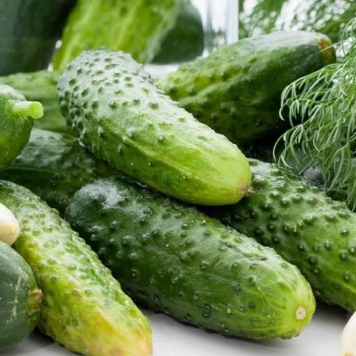 graines-concombre-cornichon-national-seeds