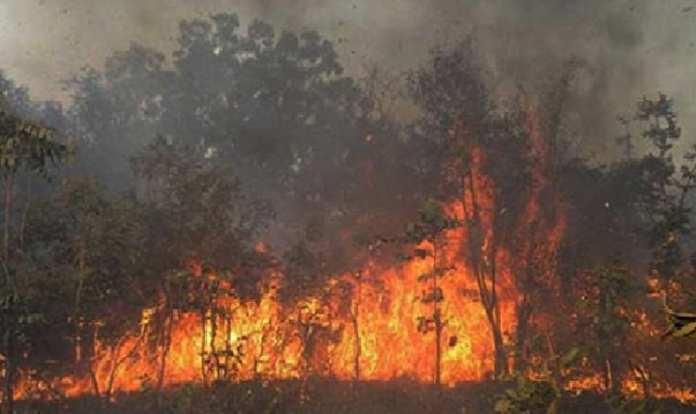 53 feux de brousse déjà recensés à Kaffrine (Chef de Service)