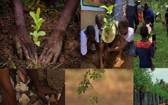 Tambacounda 1.200 arbres plantés à Sinthiou Malène