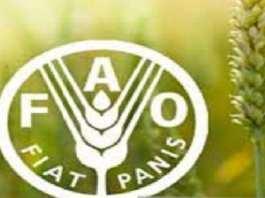 production mondiale FAO