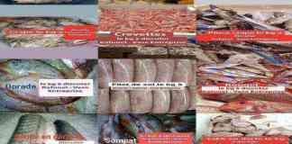 Catalogue Poisson sans prix