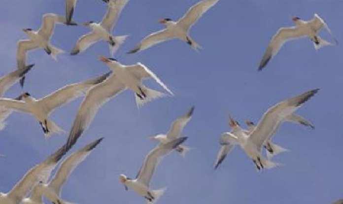 les-acteurs-invites-a-proteger-les-oiseaux-migrateurs