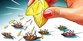 12 matieres naturelles de se débarrasser des cafards