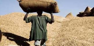 arachide-le-prix-au-producteur-fixe-a-250-francs-le-kg