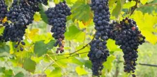 grape-de raisins