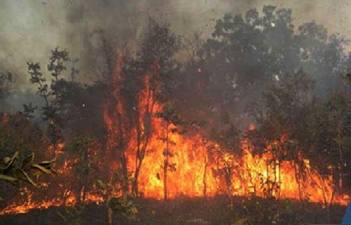 kaffrine-58-cas-de-feux-de-brousse-pour-2-453-hectares-ravages-en-2019-2020