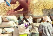 arachide-aucune-graine-recue-a-ziguinchor-mort-programmee-des-huileries-locales-syndicalistes