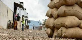 oid-ziguinchor-pres-de-39-000-tonnes-d-anacardes-pour-une-valeur-financiere-de-22-milliards-fcfa-en-2020-officiel